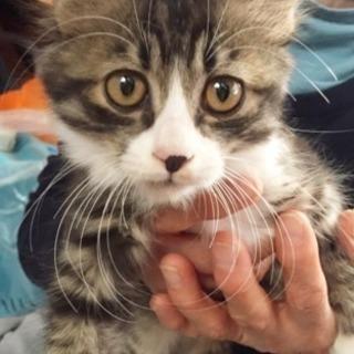 約3ヶ月 オス 子猫