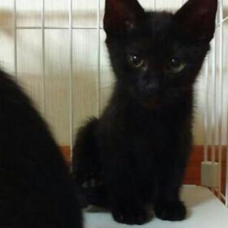 再募集❗黒猫2ヶ月半