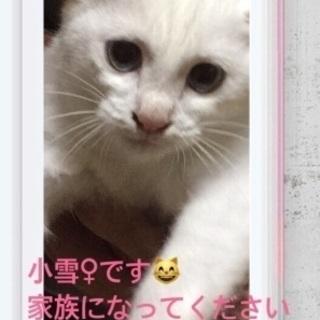 かわいい白猫の小雪ちゃん