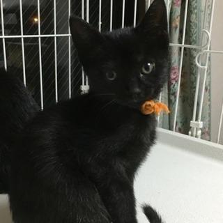 3ヶ月の人懐こい黒猫君