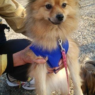 かわいい迷い犬見つけました! 飼い主さん、里親候補探しています。