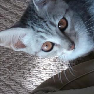 金色お目めの美人な猫ちゃん