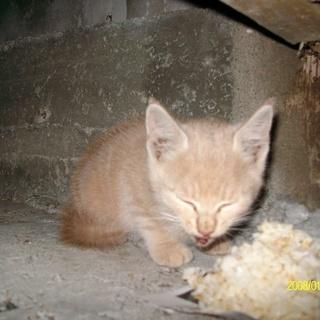 大至急、捨てられた子猫もらって下さい。