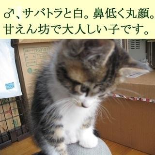大失敗です!忍び込んだノラ猫がうちの中で出産してしまいました!!