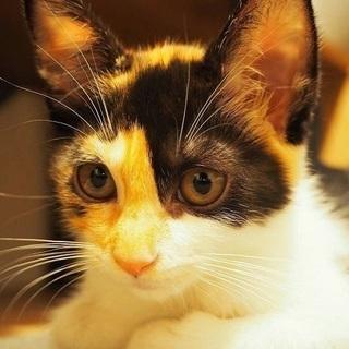 美人三毛ちゃん3ヶ月、呼び名はオドちゃん、穏やかでおしとやか!