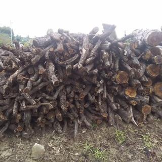 薪(ぶどうの樹)