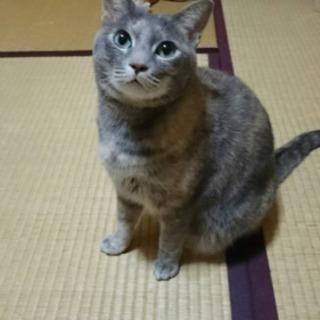 7才美猫パステルサビ♀