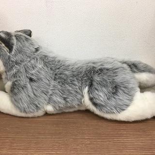 大型 シベリアンハスキー ぬいぐるみ 犬