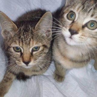 二匹の子猫の里親探してます
