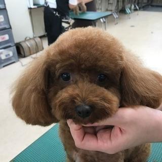 無料 カットモデル犬 募集 東京