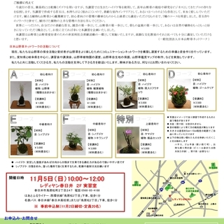 11月5日(日)苔玉の作り方講習