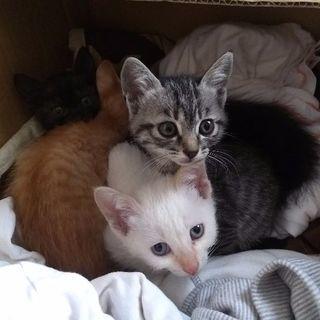 [再々掲] 子猫の里親募集