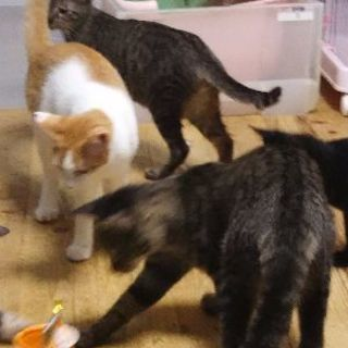 猫ボランティア募集