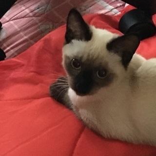 生後4ヶ月の子猫です