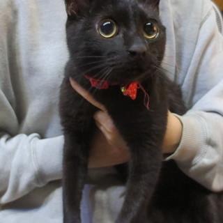黒ネコのオス、6か月
