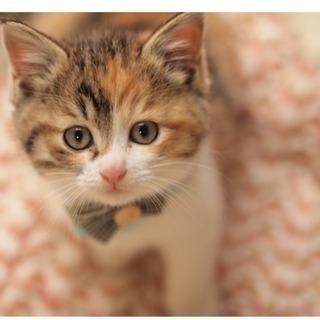 1ヶ月半の三毛猫