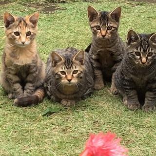 猫4兄弟を保護しています。里親募集です。