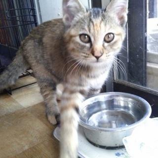 里親募集!2ヶ月の子猫です