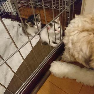 赤ちゃん猫を保護しました。