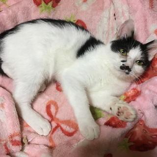 ネコちゃんの里親募集!4ヶ月くらい~数匹おります。なついてカワイイです!