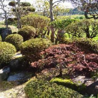 お庭の綺麗な古民家でランチしませんか?