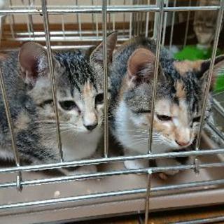 4ヶ月メス仔猫2匹