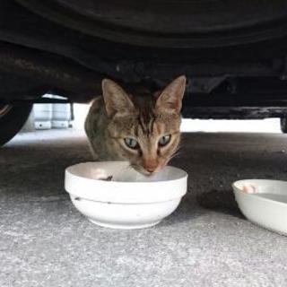 迷子猫です。飼い主さんを探しています。
