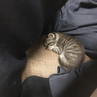 子猫の里親を探してます