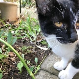 3ヶ月くらいの黒ぶち子猫