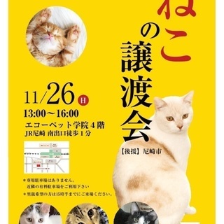 第9回 猫の譲渡会☆彡.。in尼崎