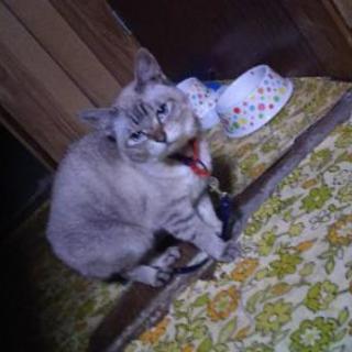 猫年齢10歳