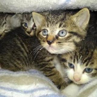 子猫4匹の里親募集します。