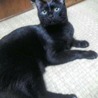 里親様 決まりました。 ありがとうございました。)黒猫 2才4ヶ...