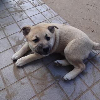 9月に生まれた2か月の子犬になります。