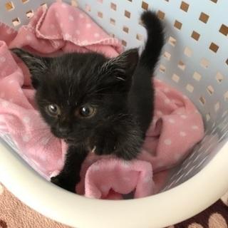 急募!可愛い子猫保護しました。生後3ヶ月ぐらいです!