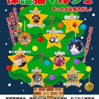 猫の譲渡会&保護猫マルシェ 開催