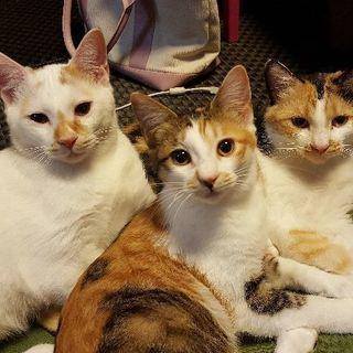 3匹の子猫(五ヶ月)