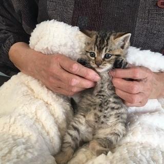 子猫2頭一緒に迎えて下さる家族募集