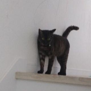 一歳のメス猫