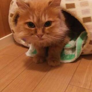 長毛の猫さん♀保護しました