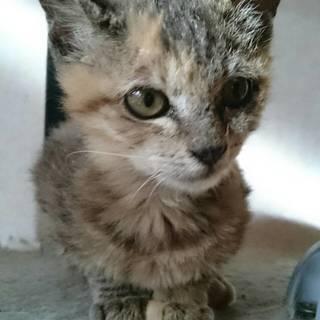 「はじめましてち-ちゃんです」17匹遺棄事件の子猫が成長しました