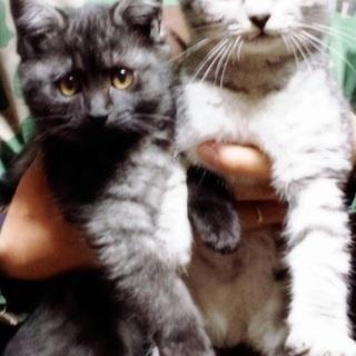 一歳のメス猫二匹