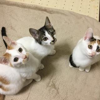 生後約3ヶ月 子猫3匹 里親募集