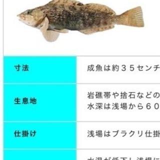 12月3日、函館で釣り仲間募集!!