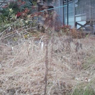 2018年来年度除草作業、限定10名予約受付致します。