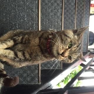 駅で待っているキジトラ♀助けてください