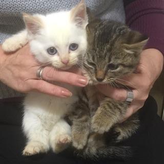 1ヶ月半の子猫たち𖤐˒˒
