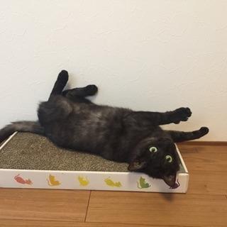 ブラックスモークの黒猫♪
