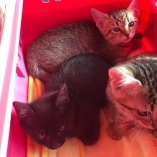 生後2ヶ月子猫 里親募集