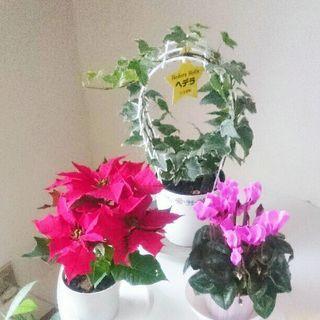 冬のお花と観葉植物セット♪